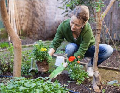femme faisant des plantations au jardin